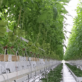 Small veolia biogaz tomate economie circulaire electricite