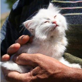 Big kitten