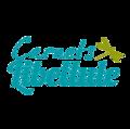 Big untouched logo carnet libellule3